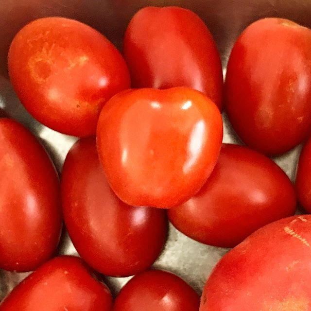 トマトの収穫が始まった。子どもが嬉しそうに毎日採っている。甘くて美味しい〜。