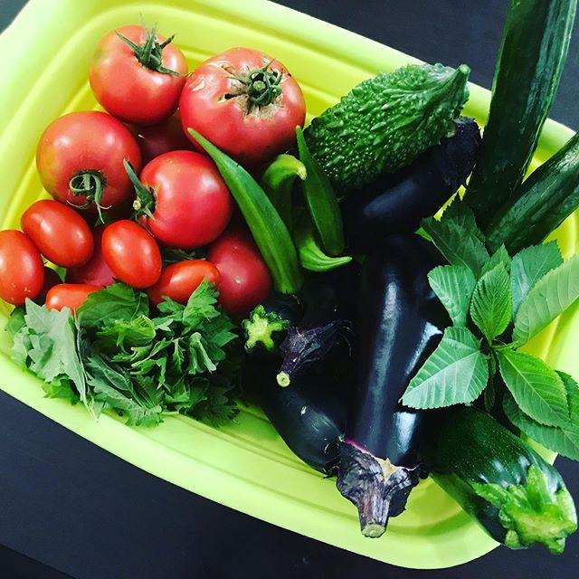 夏野菜の収穫が止まらない…