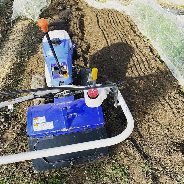 秋晴れの11月。耕運機で冬野菜の準備。春に向けてエンドウの苗を植えるための畝作り。