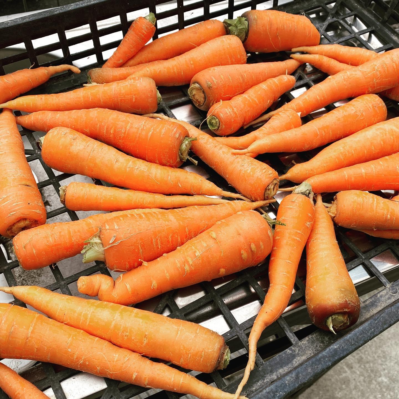 毎朝野菜ジュースを飲み続けているので、ニンジンを一年中作っています。今朝採れたニンジン、来月に採れるニンジン、今朝種を撒いたニンジン。