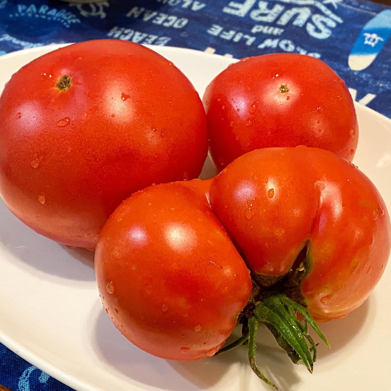今年初モノ桃太郎トマト 子どもたちは「おしりたんてい」と大喜び。