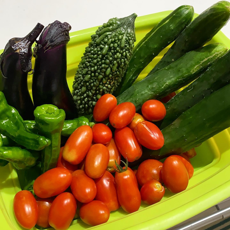 梅雨の合間の夏野菜。 太陽出てないのに色づいてます。毎日トマトときゅうり食べてます…