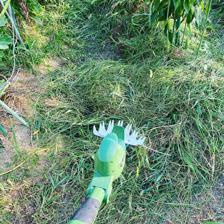 大量の雑草処理は、バリカン&三角ホーで。 長い梅雨の雨が上がったあとは、強い日差しの毎日。あっという間に雑草も伸びて、一気に草原と化します。もうこうなると草刈りの気も失せて、伸び放題。しかし近所迷惑も考えるとやっぱり草刈りは必要です。そんな時には電動草刈り機の出番。広い畑ではエンジン式を使いますが、狭い場所では電動草刈り機が一番。しかも円盤型よりもバリカンの方がピンポイントで刈れます。刈ったあとから三角ホーなどで根元を刈れば生えにくくなります。刈った草は、草マルチに。特にピーマンやきゅうりなどは土の保水のためにマルチで使うのが有効です。水をあげてもどんどん干上がっていきますからね。熱中症にも気をつけたいので機械にも頼っていきましょう。