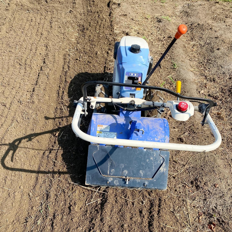 【秋冬野菜の準備 〜夏の終わりの、畑を耕すタイミング】 いよいよ9月。 お盆に耕そうと思ってから雨が降らず2週間が過ぎました。ようやく雨が少し降ってくれたと思ったら、9月からはずっと雨マーク️台風も来るらしい。 「今日しかない!」 ということで、広めの第二ファームを朝から耕運機で土起こし。 朝から3時間、35度くらいまで気温が上がるなか、なんとか完了! ホッとしたのもつかの間、すぐに雨が降ってきました。ギリギリセーフ…なかなか際どい… そんなわけでなんとか秋冬の野菜づくりのスタートがようやくはじめられました。