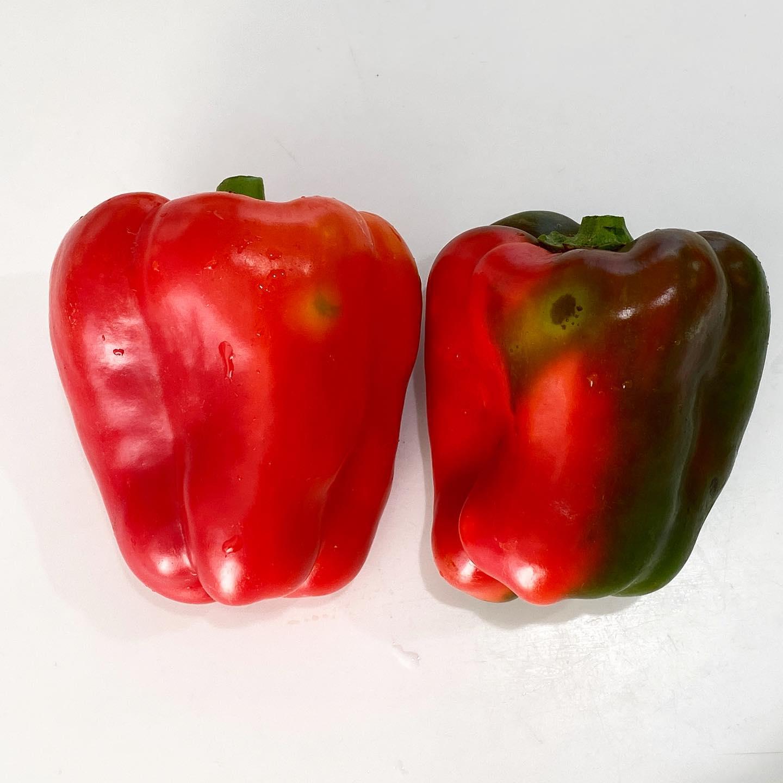 パプリカは、収穫後にも色づきます。半分くらい色が変わったら採っても大丈夫 全く緑のものは色づかないので注意です❣️ この木枯しで重いパプリカが何本も折れました…早めの収穫もオススメです。 #パプリカ #赤パプリカ #パプリカ栽培  #パプリカ大好き  #パプリカ追熟 #パプリカ色づかない #パプリカ収穫 #パプリカの育て方 #パプリカの栽培 #緑のパプリカ