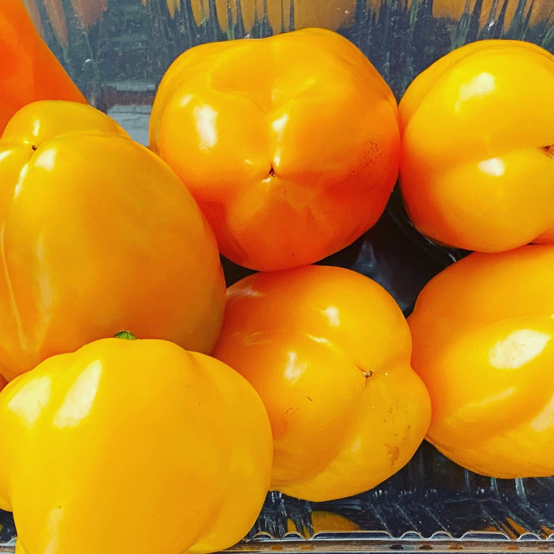 黄パプリカもどんどん追熟して美しい黄色に。最近は黄色ばかりのパプリカ祭り。
